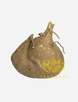 Aagasa Garudan Kilangu-Malli herbs