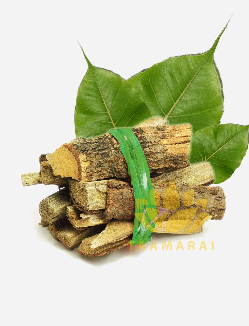 Peepal Tree Sticks-Arasam tree wood sticks